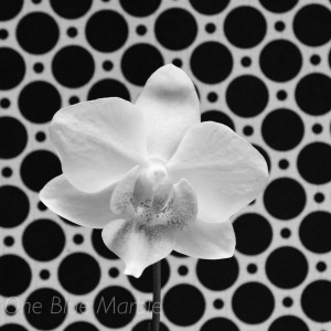 ORCHID (PHOTO EXPERIMENT)