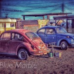 BUGS. BOMBAY BEACH. SALTON SEA